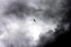 Серьёзный орёл
