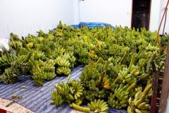 Отдыхающие бананы