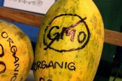 Манго без ГМО