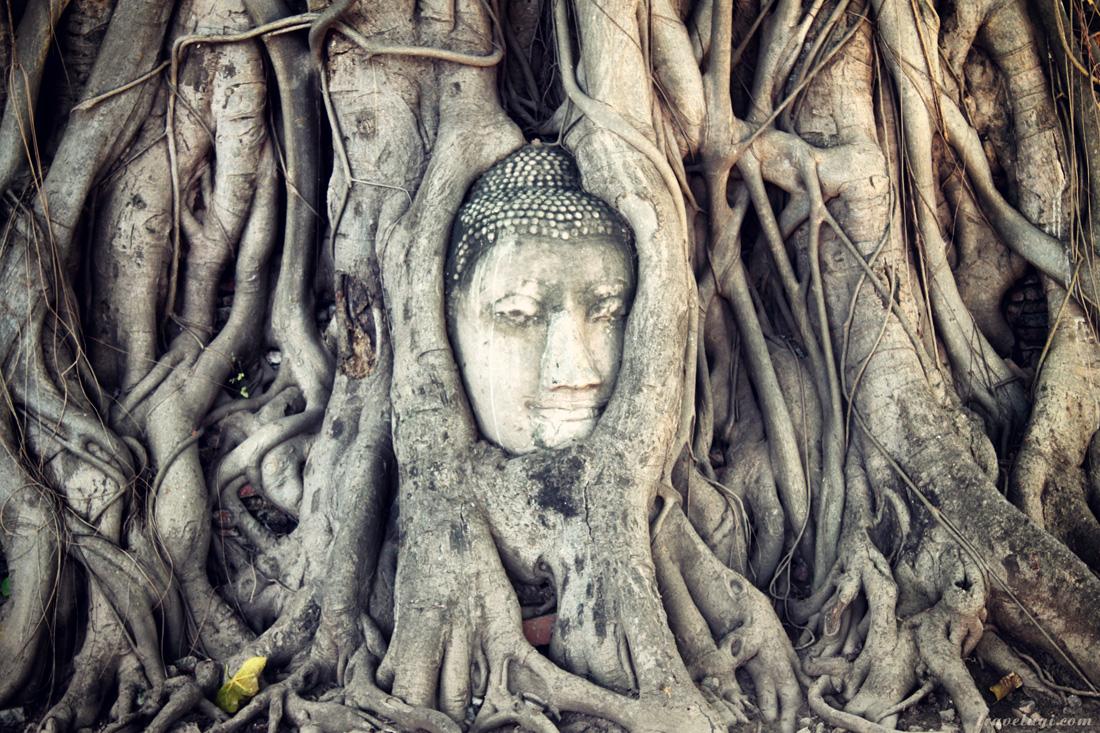 Голова Будды в корнях дерева. Ват Махатхат, Аюттайя.