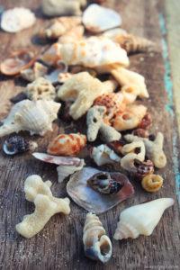 Ракушки и кораллы с тайских пляжей